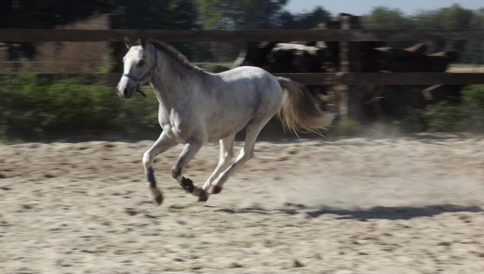 Mil (poney BWP) - Hiver 2011