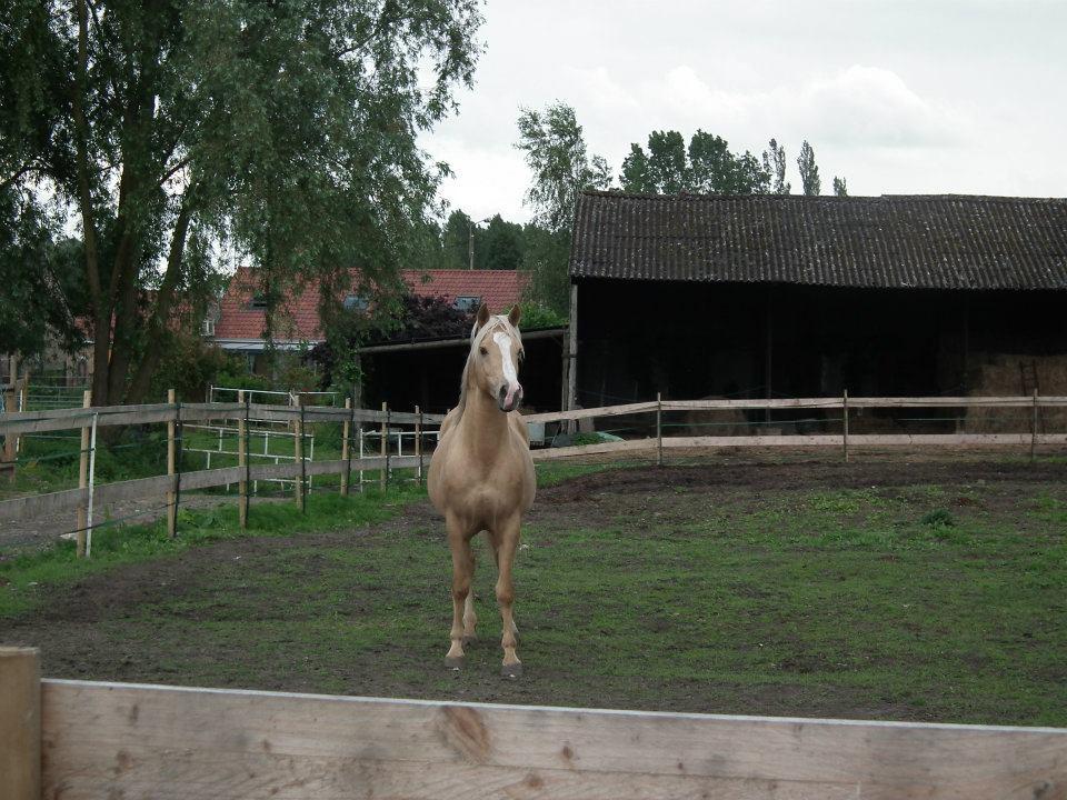 Eté 2012