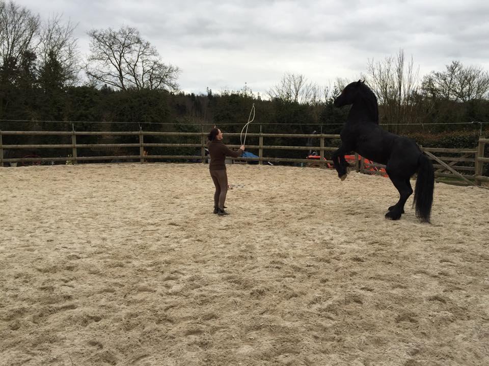 Avril 2015 au Haras du Vallon des Crins noirs (27).