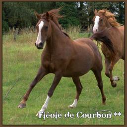 Fléole de Courbon (Arabe - IRE**) - Eté 2011