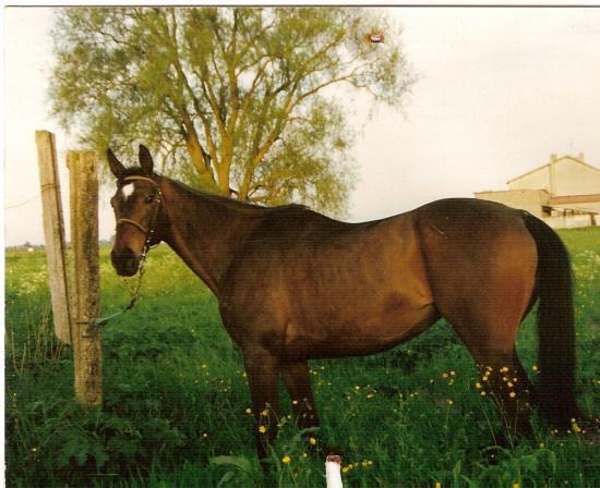 Beauté du Futoy (ONCS) - Eté 1998