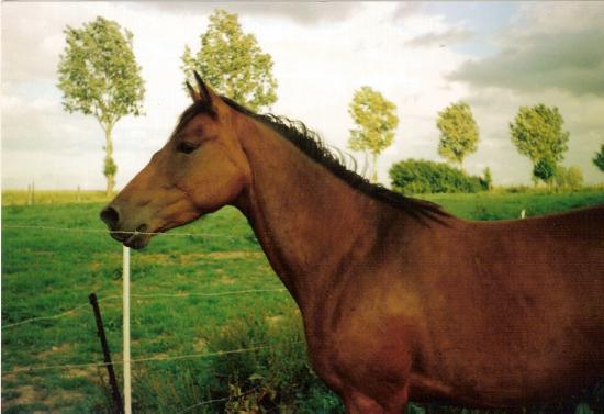 Myrtille (ONCS) - Eté 2003