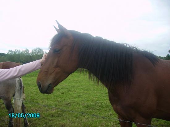 Philaé de Quiévy (SFA) - Eté 2009