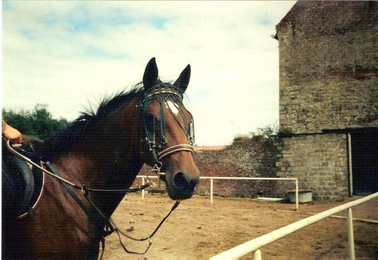 Diane des Saules (SFA) - Eté 1998