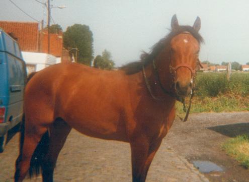 Goliath (ONCS) - Eté 1998