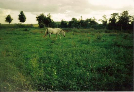 Etoile du Futoy (ONCP) - Eté 2004