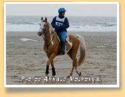 Vic Altaïr (Origines Etrangères de Selle pie palomino - IRE** - DRE**)