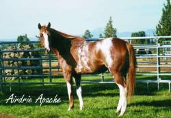Airdrie apache (PS)
