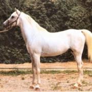 Alhabac (Arabe)