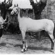 Alricho (Arabe)