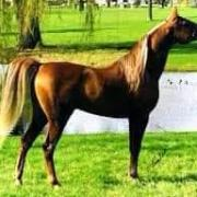 Cn Jericho (Arabe)