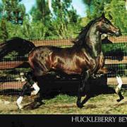 Huckleberry Bey (Arabe)