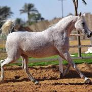 Jamila I (Arabe)