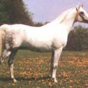 Maklouf (Arabe - DRE****)