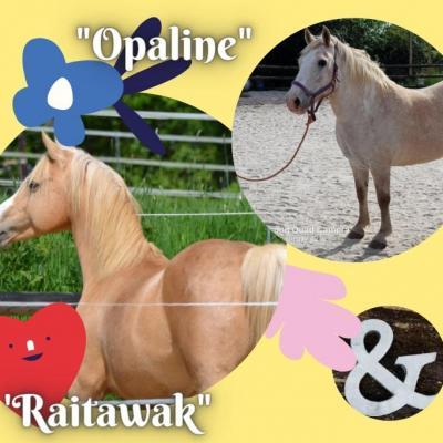 Raitawak & Opaline