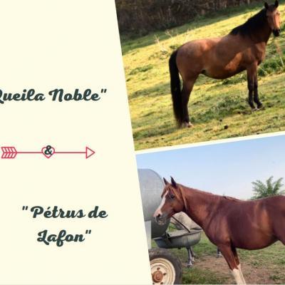 Pétrus de Lafon & Queila Noble