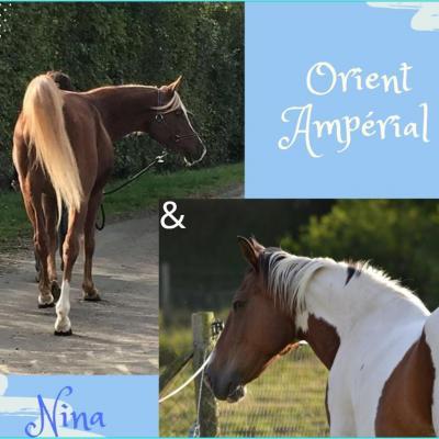 Ampérial x Nina