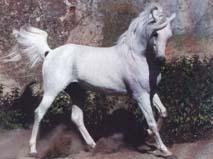 Masan (Arabe - DRE****)
