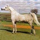 Messaoud (Arabe)