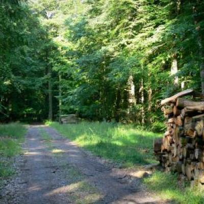 Forêt domaniale de Moulins Bonsmoulins