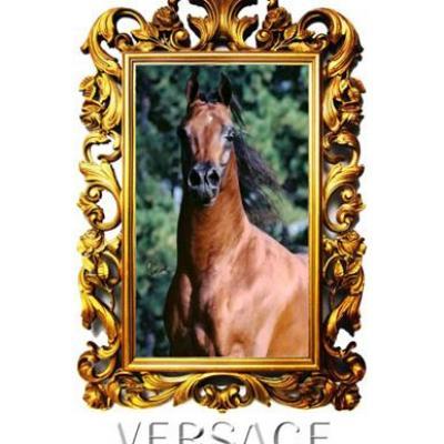 Versace (Arabe)